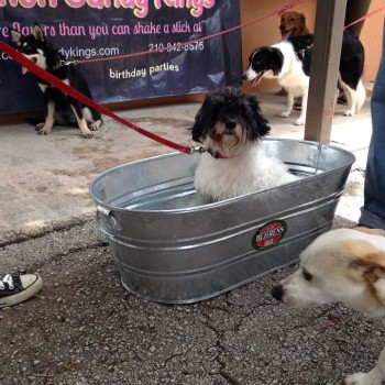 At least one San Antonio Animal Services dog was prepared for high water.  (SAACS/Facebook photo)